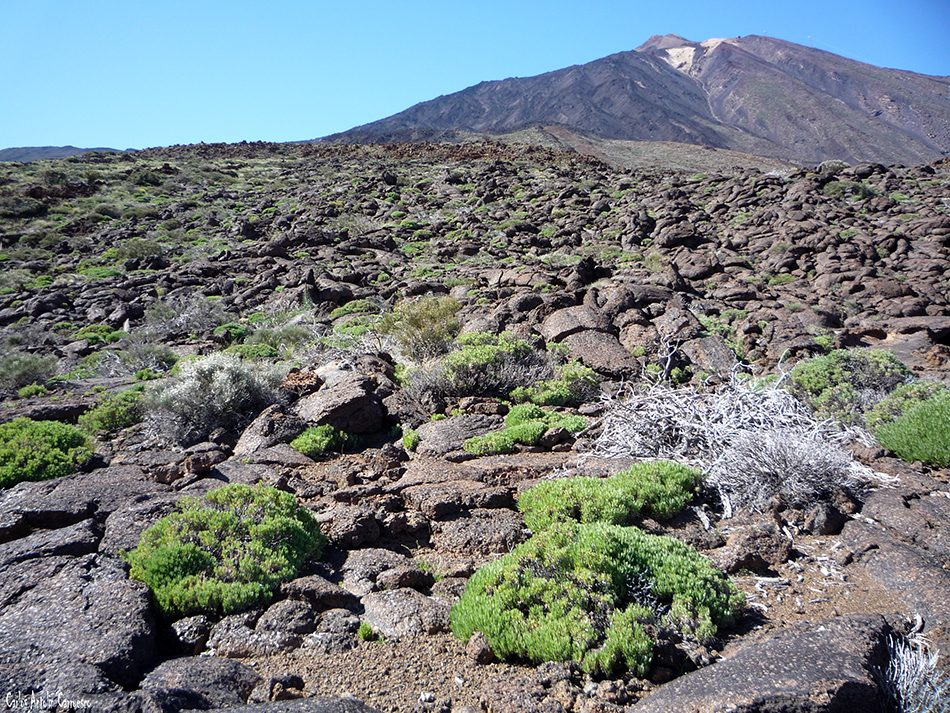 Lavas cordadas Pahoe hoe - Parque Nacional del Teide - Tenerife