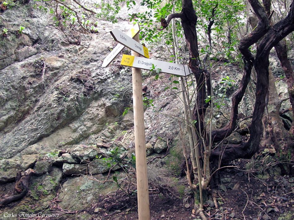 seguimos dirección a El Draguillo - anaga - el draguillo