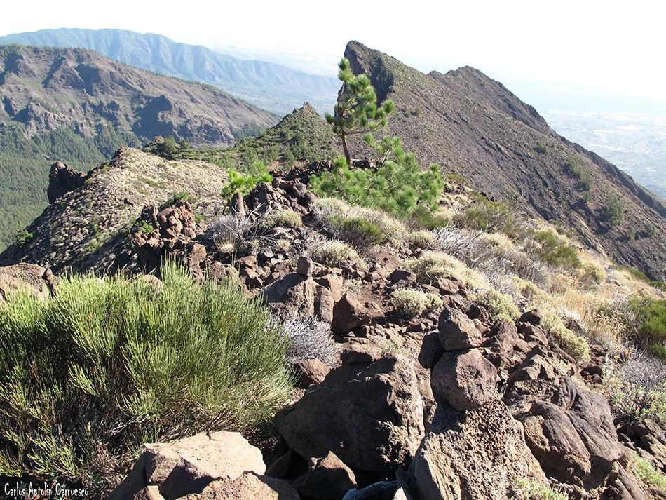 Parque Nacional del Teide - Tenerife - Pico del Valle - Cho Marcial