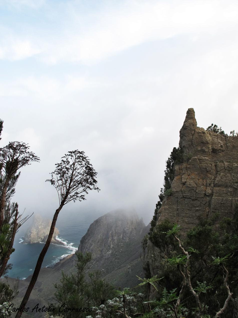 Roque de Dentro - Punta Bajo las Palmas