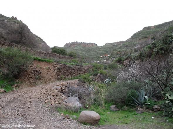 Lereta - Barranco de Guayadeque - Gran Canaria