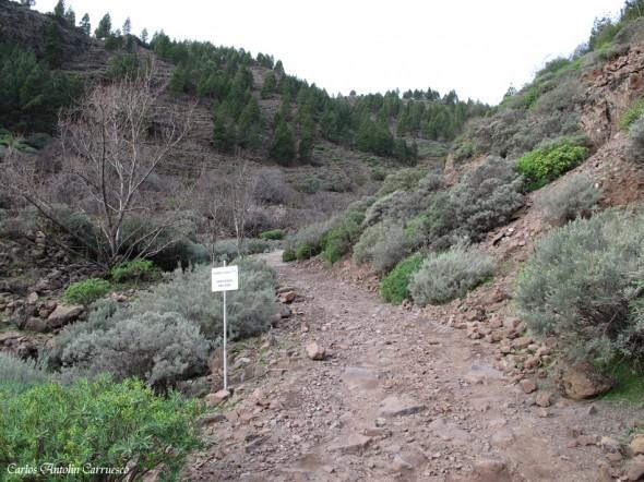 Los Bucios - Barranco de Guayadeque - Gran Canaria