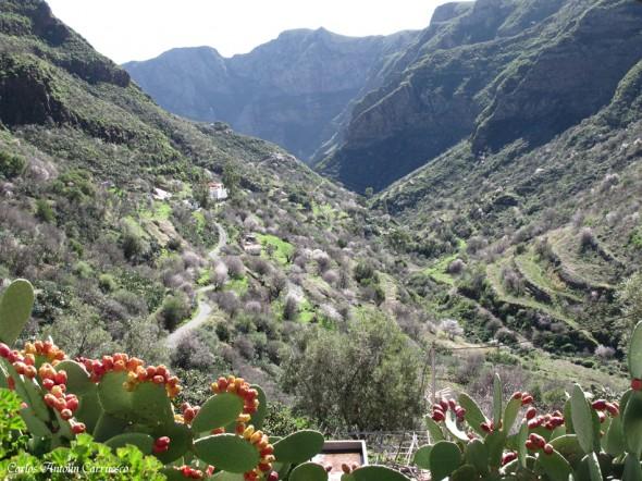 GC130 - Lereta - Gran Canaria - guayadeque