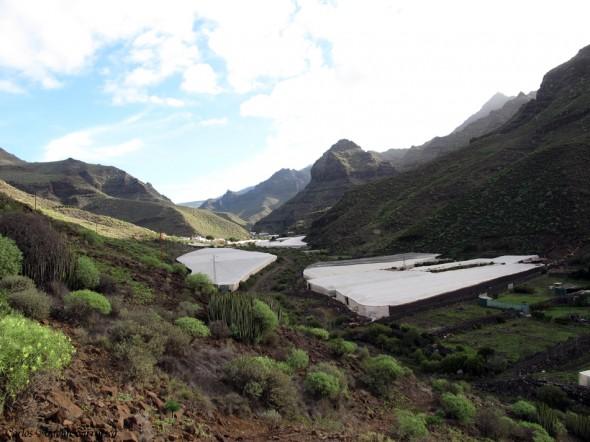 Güi Güi - Guguy - Gran Canaria - tasartico