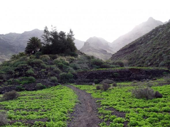 Güi Güi - Guguy - Gran Canaria