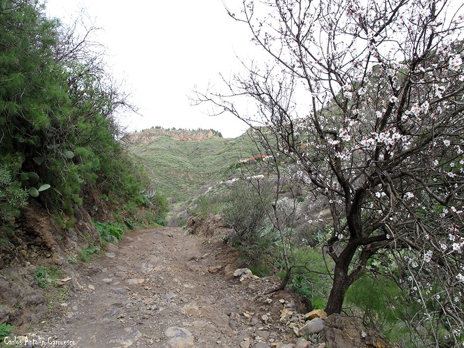 Lereta - Guayadeque - Gran Canaria