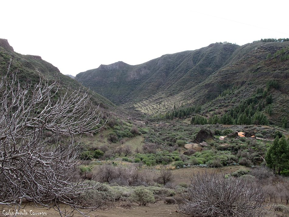 Los Bucios - Guayadeque - Gran Canaria