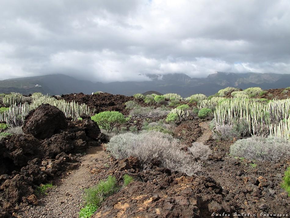 Malpaís de Güímar - Puertito de Güímar - Tenerife