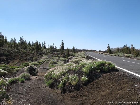 Ruta Nº 9 - Tenerife - Parque Nacional del Teide