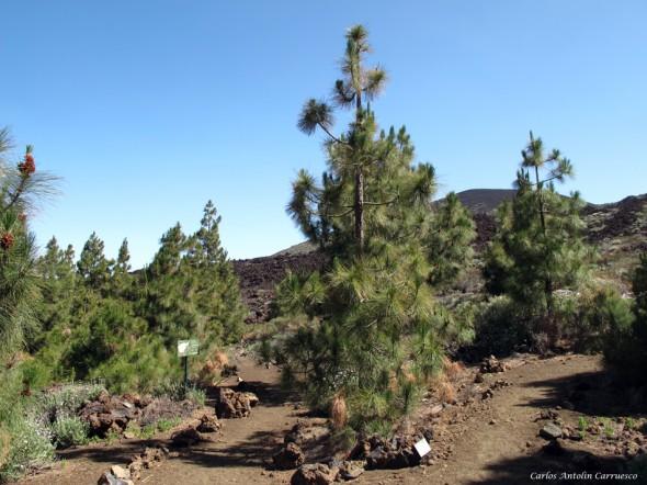 Ruta Nº 9 - Teide - Tenerife