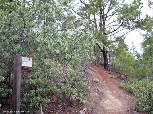 Parque Natural de Tamadaba - Altavista - Gran Canaria