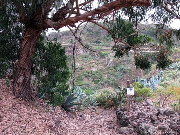 Azuaje - Gran Canaria