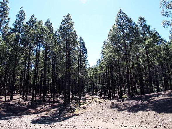 Área Recreativa Llanos de La Pez - Gran Canaria