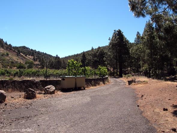Llanos de La Pez - Área Recreativa - Gran Canaria