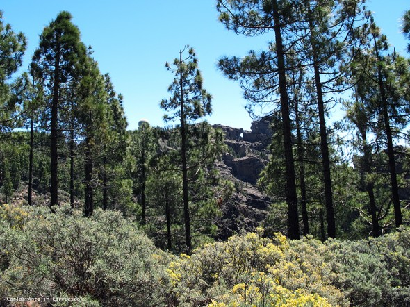 Degollada Piedras Blancas - Degollada de Los Hornos - Gran Canaria