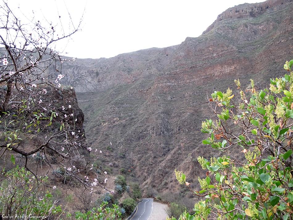 GC103 - Barranco de Guayadeque - Gran Canaria