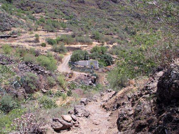 Lereta - Barranco de Guayadeque - Gran Canaria - cruce del Olivo