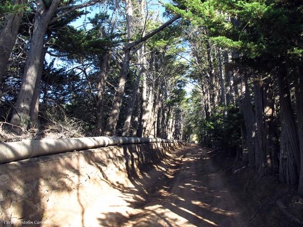 dirección al Parque Natural de la Corona Forestal - Tenerife