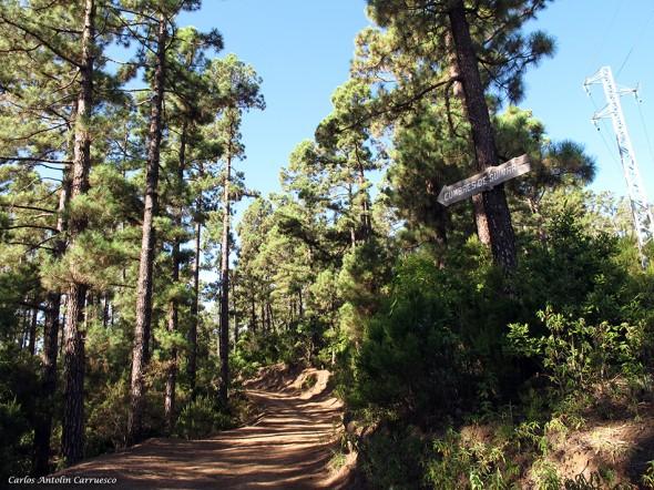 Parque Natural de la Corona Forestal - Tenerife