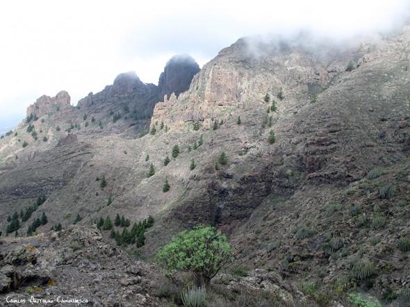 Adeje - Camino de Suarez - Tenerife - Degollada de los Frailitos