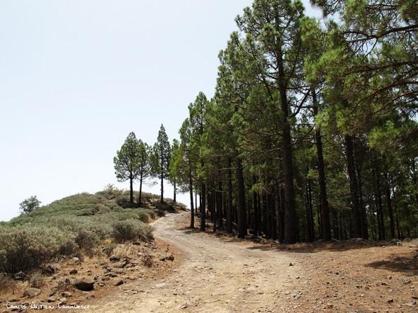 dirección al Paso Bermejo - Gran Canaria