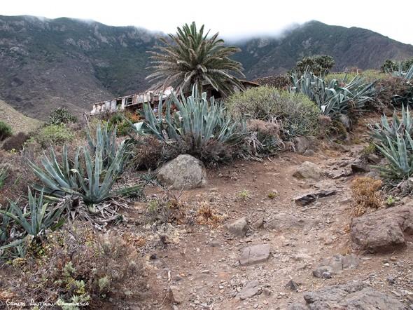 Anaga - Las Palmas - Tenerife
