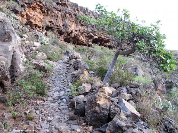 Vento - Roque del Conde - Barranco del Rey - Tenerife