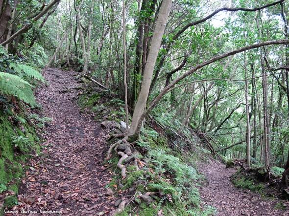Camino de las Vueltas - Anaga - Tenerife