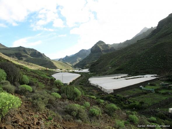Tasartico - Güi Güi - Gran Canaria