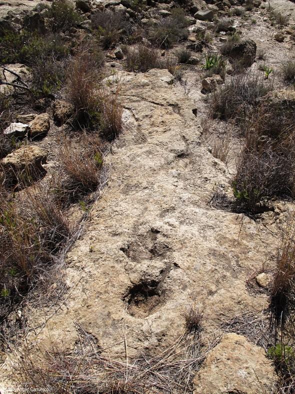 cazoleta - San Miguel de Abona - Camino de Los Muertos