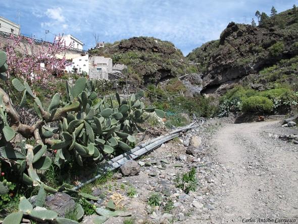 Aripe - Tenerife