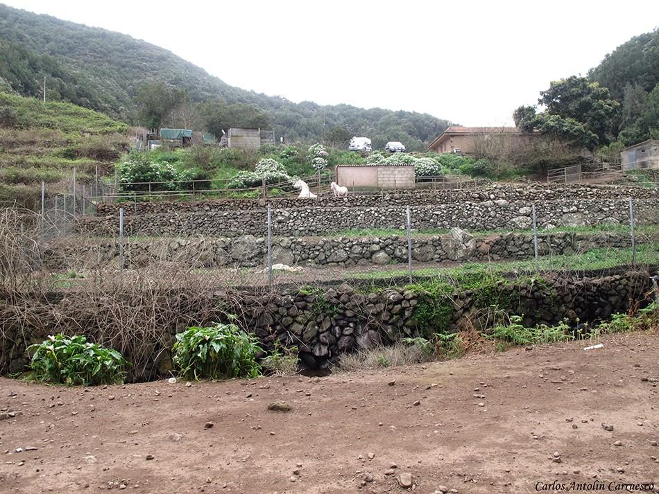 Camping La Vista - El Cedro - La Gomera