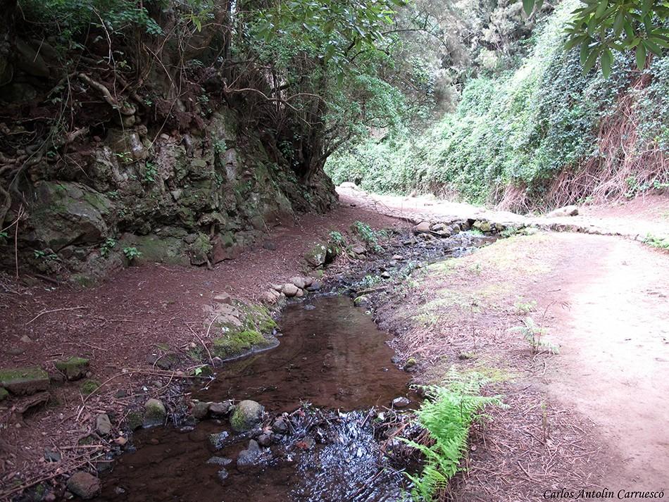 Arroyo de El Cedro - la Gomera