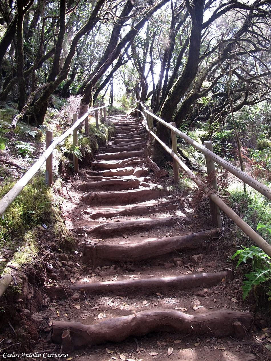 El Cedro - Parque Nacional de Garajonay - La Gomera