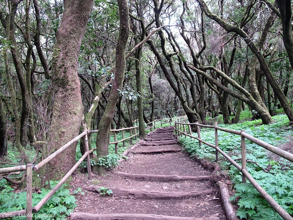Laguna Grande - Parque Nacional de Garajonay - La Gomera