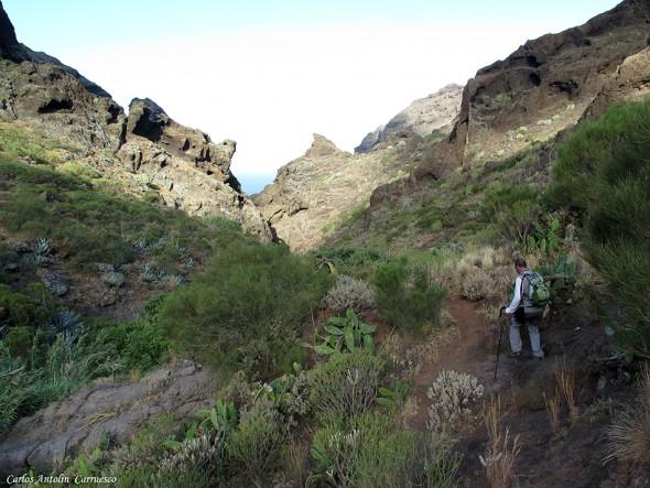 Los Carrizales - Teno - Tenerife