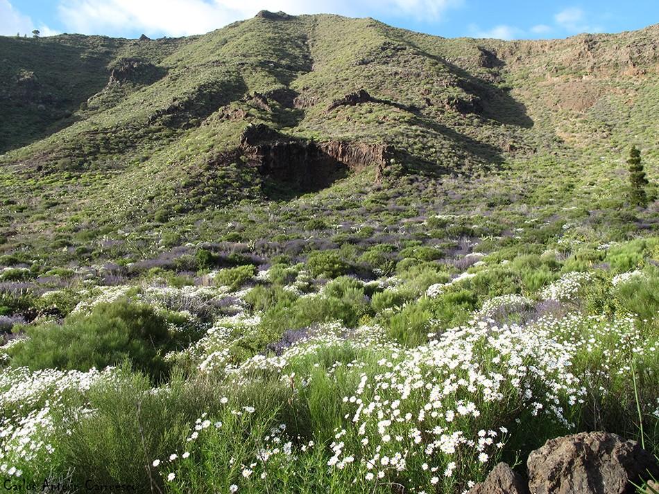 El Retamar - Tenerife