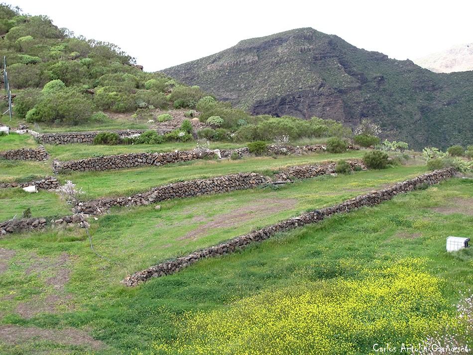 Arguayo - Tenerife - bancales de cultivo