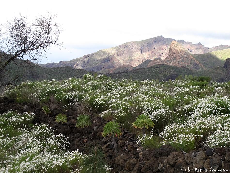 Risco Blanco - Arguayo - Tenerife