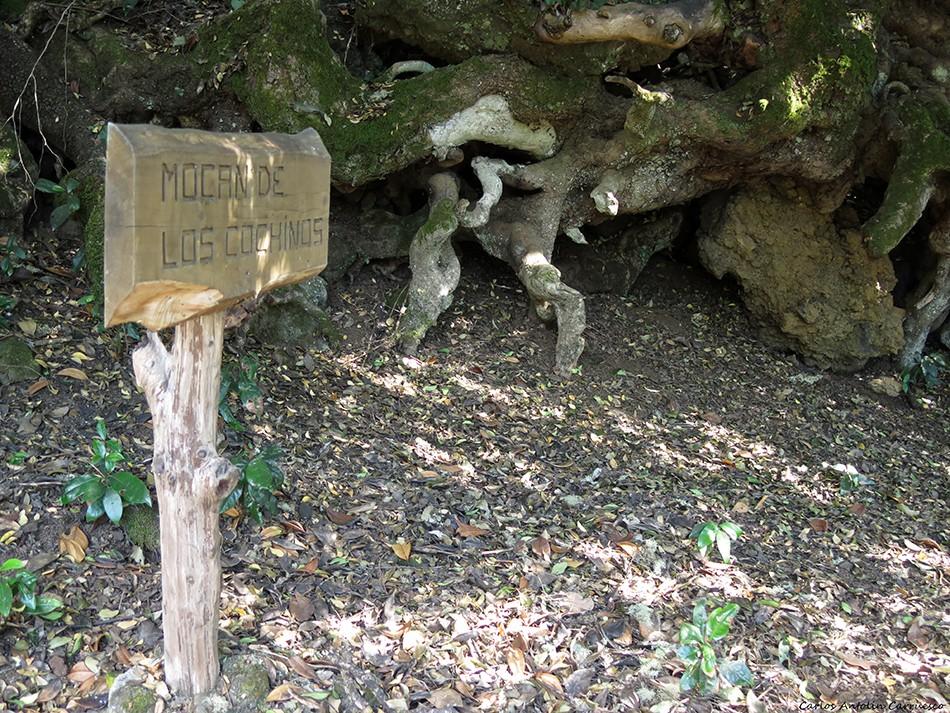 Camino de Jinama - El Hierro - mocán de los cochinos