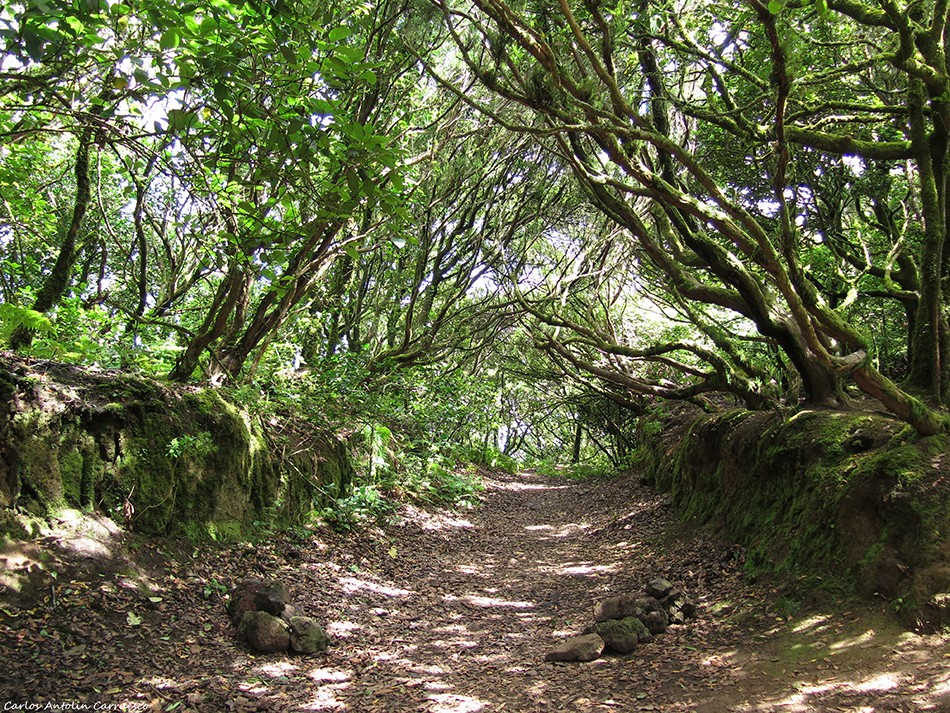 La Ensillada - El Pijaral - Tenerife
