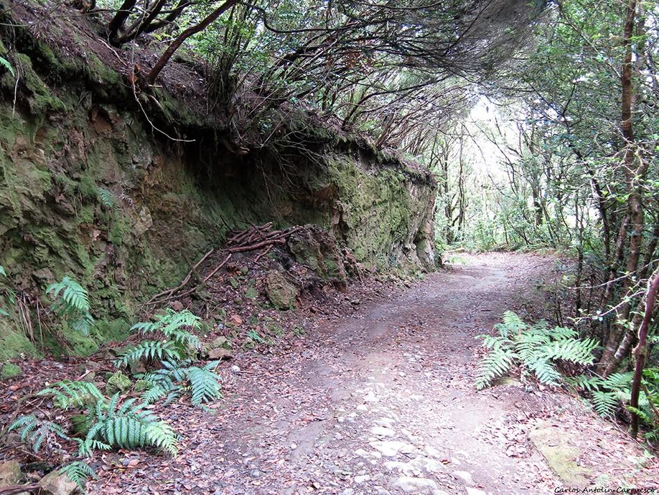 El Pijaral - Anaga - Tenerife