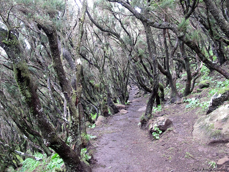 Cumbres de Baracán - Teno - Tenerife