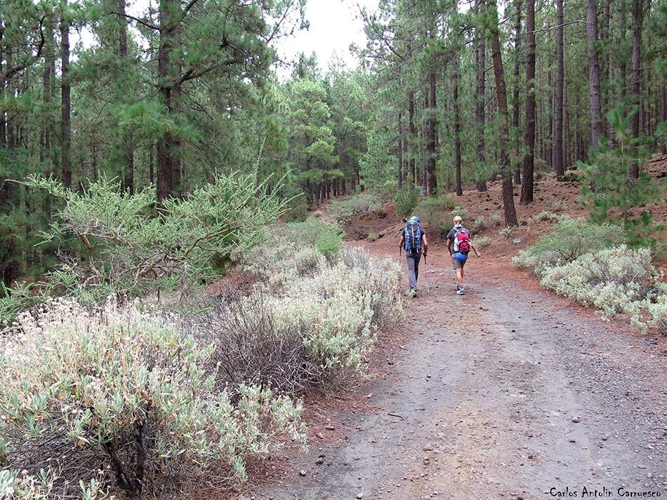 Pista Chimoche - Corona Forestal - Tenerife