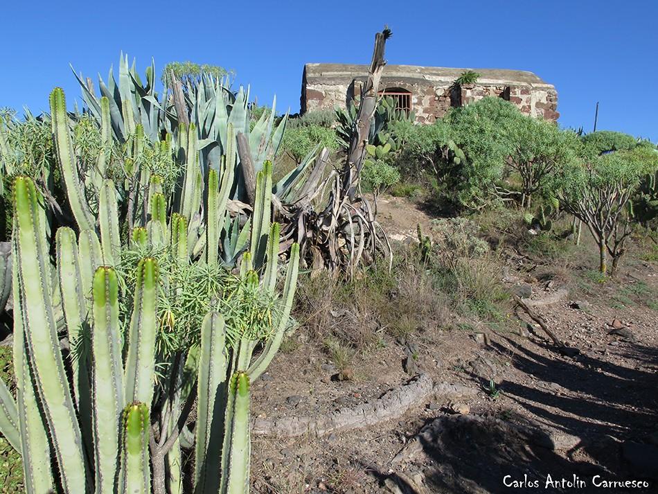 Atalaya de los Ingleses - Anaga - Tenerife