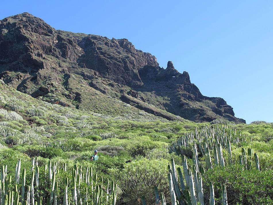 Los Gigantes - Punta Teno - Tenerife - roque chiñaco