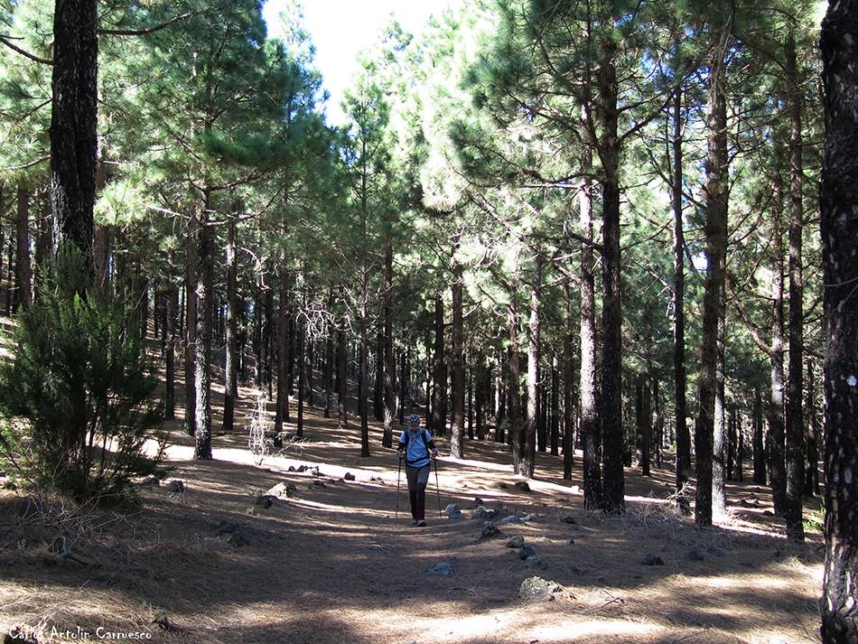 Corona Forestal - Garachico - Tenerife