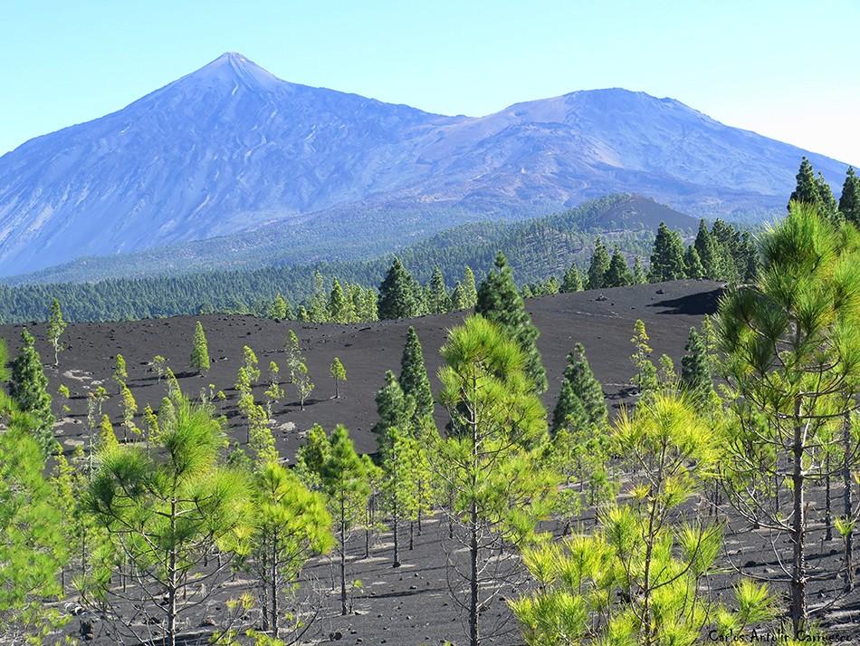 Garachico - Corona Forestal - Tenerife - Teide - Pico Viejo