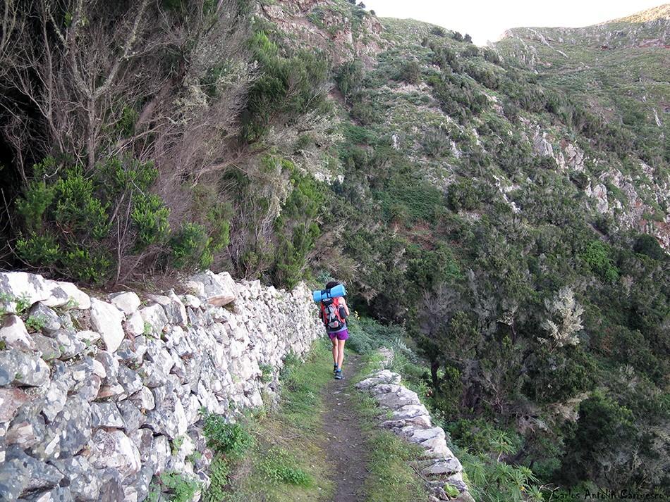 Palo Hincado - Anaga - Tenerife