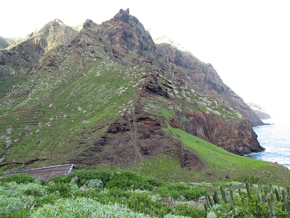 Barranco de Afur - Tamadiste - Anaga - Cumbres de Taborno - Tenerife